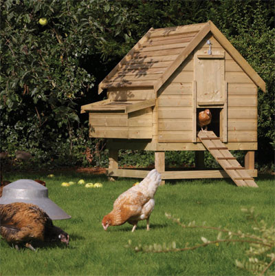 Fact File Keeping Chickens Beginners Guide